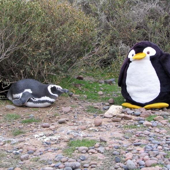 Treffen mit Pinguinen