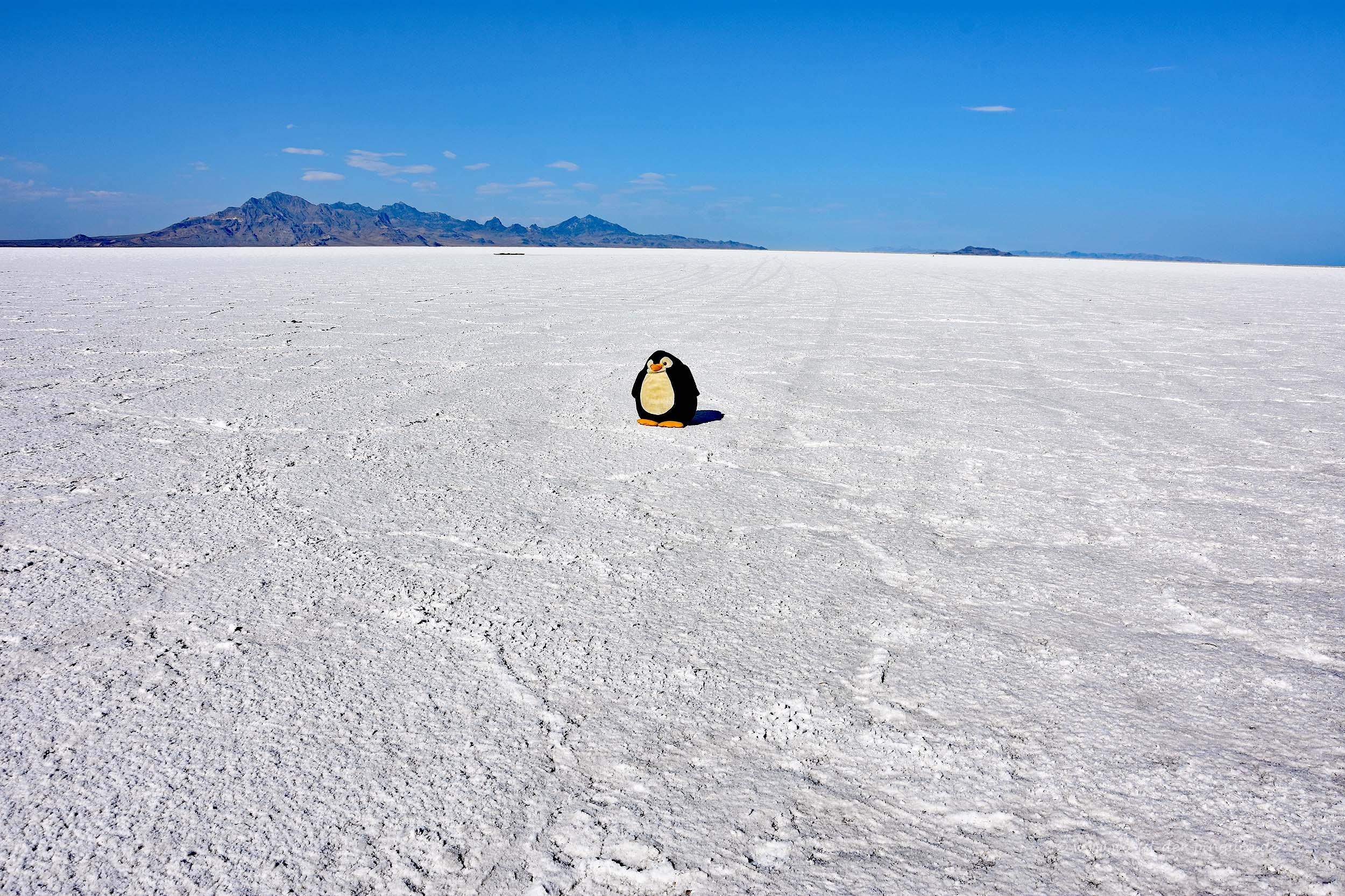 Großer Salzsee bei Salt Lake City