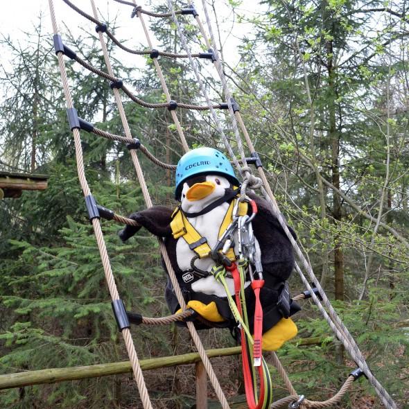 Klettern im Wildwald