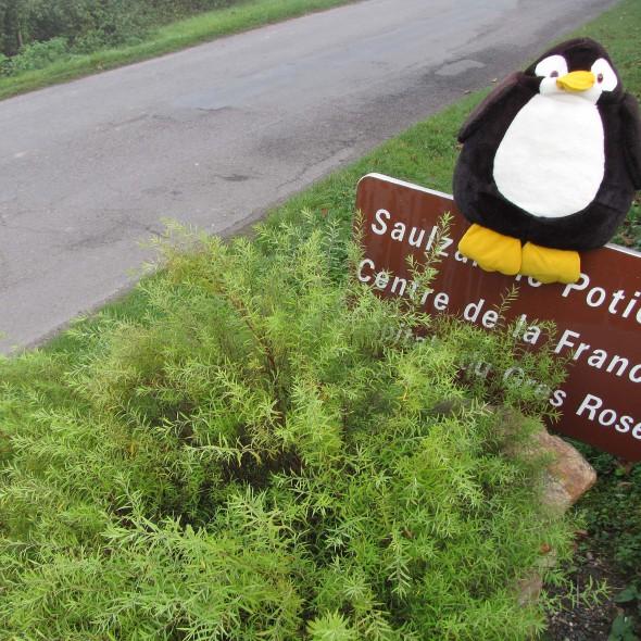 Saulzais-le-Potier ist ein geografischer Mittelpunkt Frankreichs