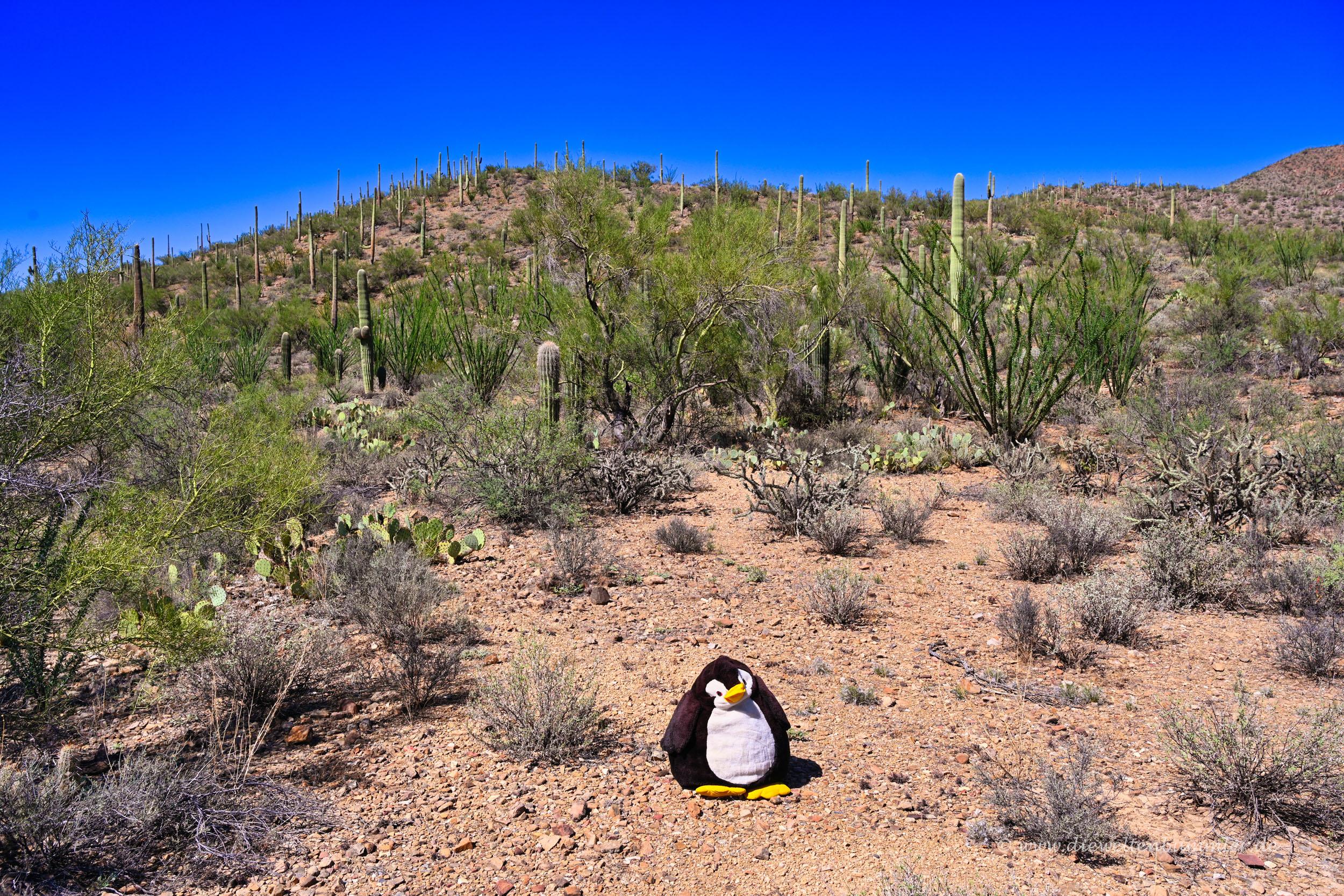 Saguaro Nationalpark